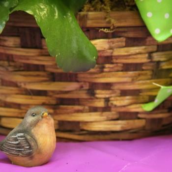 Bird in Showroom